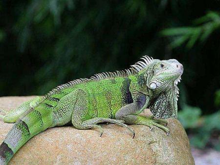 爬行动物展厂家分享爬行动物的特征