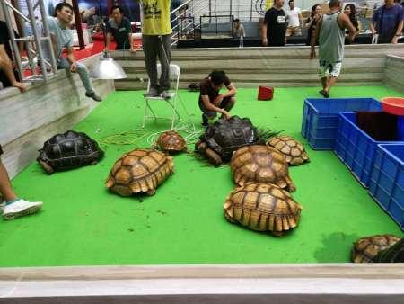 爬行动物展:世界上十大重量爬行动物