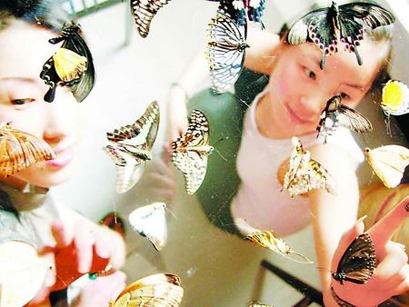 蝴蝶展出租说说蝴蝶的组成及发育