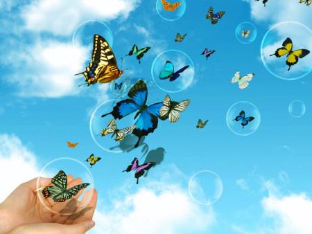 蝴蝶放飞过程中常见问题