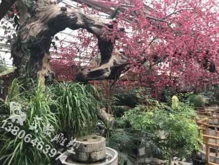园艺生态门