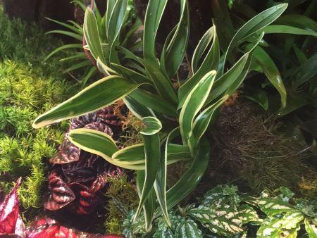 【新手攻略】热带雨林风貌的雨林缸造景