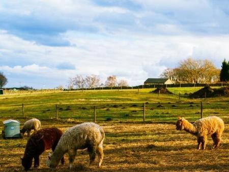 农场环境可视化远程监控系统 | 农场环境远程监控系统