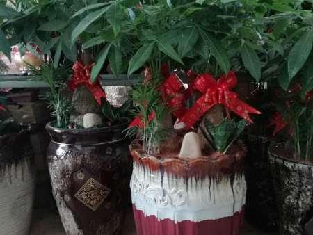 福州花卉养护