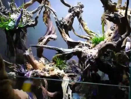 北京雨林缸的准备工作有什么呢?