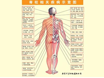 bwin中国官方梳理床_颤足抖脊床_价格_厂家-丹东升宇科技有限公司