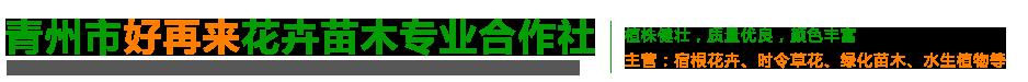 青州市好再来花卉苗木专业合作社