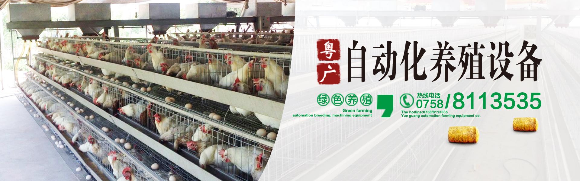 养鸡场设备 蛋鸡养殖设备