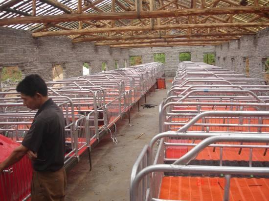新乡猪用产床设备厂告诉您母猪生产需要哪些要求