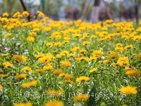 宿根花卉种植培育小常识有哪些