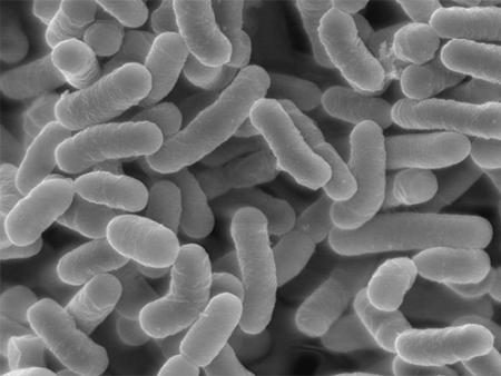 微生物万博官网manbetxapp