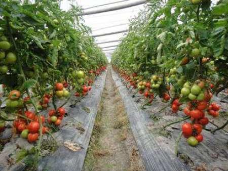 蔬菜配送基地