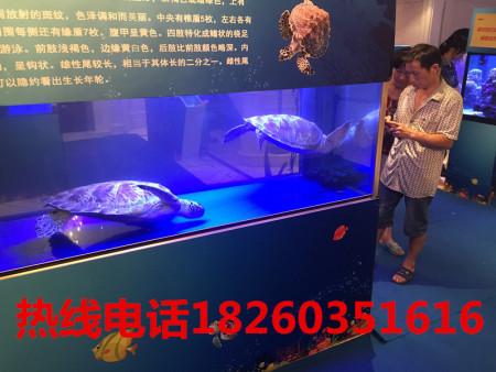海狮表演出租厂家浅谈海狮的进化过程
