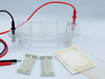 六一 DYCP-31CN型琼脂糖水平电泳仪(小号)