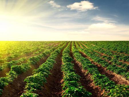 微生物菌肥对土壤的作用