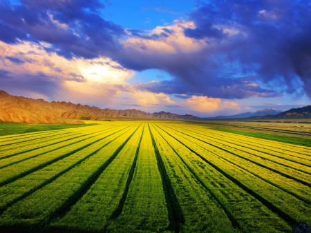 微生物肥料助力农业发展