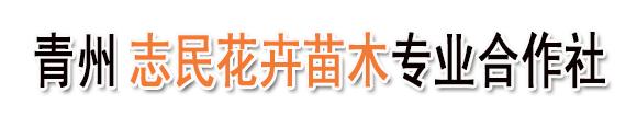 青州志民花卉苗木专业合作社