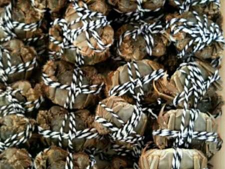 盘锦野生河蟹价格
