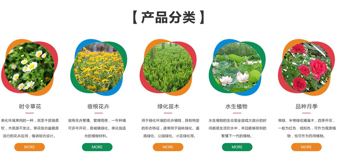 青州市宇宙花卉苗木有限公司
