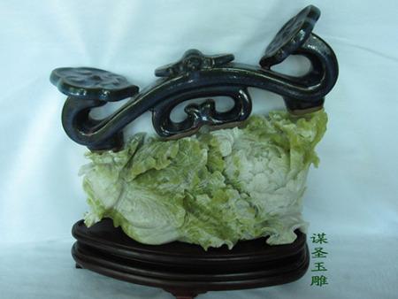 玉白菜XY2
