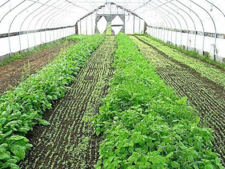 大棚蔬菜施肥技巧