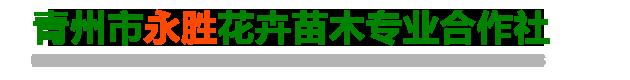 青州市永胜花卉苗木合作社