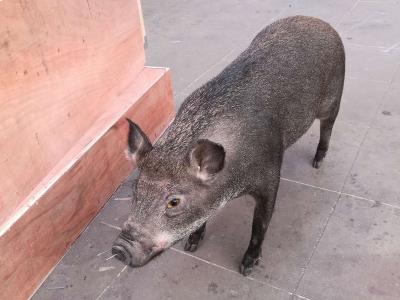 动物伊人在线制作_动物伊人在线批发_动物伊人在线培训_珍禽养殖等厂家—青州市纪元动物伊人在线制作中心