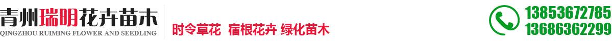 青州瑞明花卉苗木
