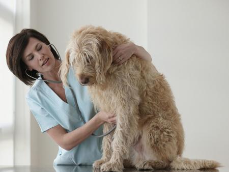 凌源宠物手术病理性术前准备您了解吗?
