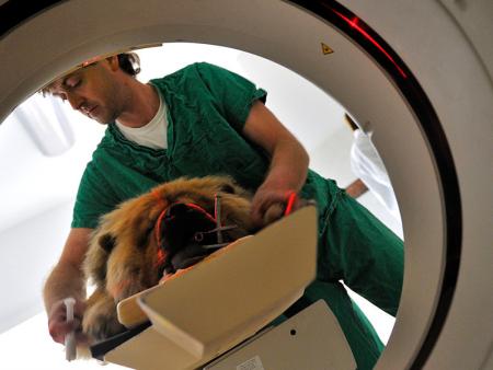 朝阳宠物医疗和您聊一聊狗狗洗澡的禁区有哪些!