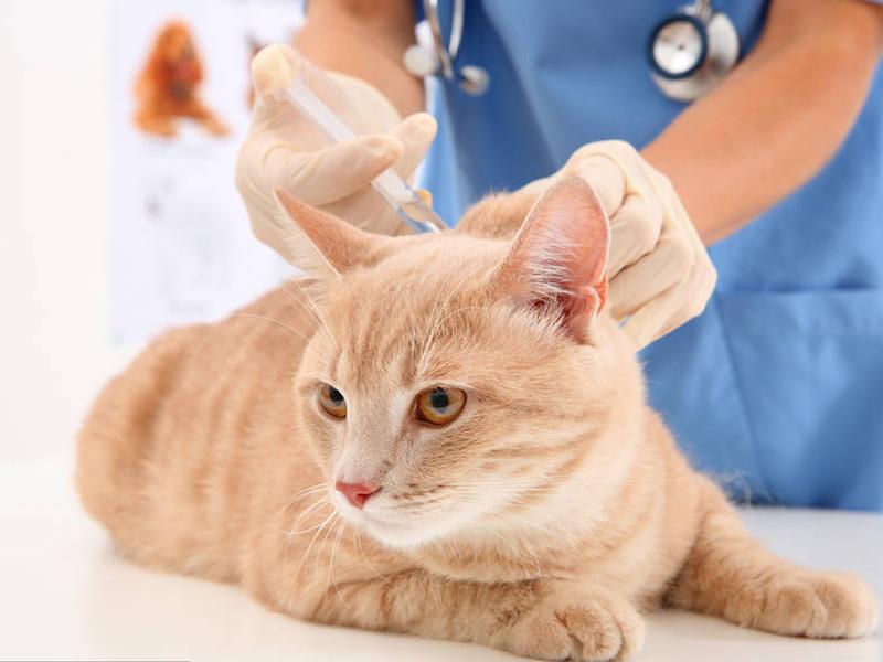 """宠物医院工作人员觉得""""活体""""宠物运输令人心酸"""