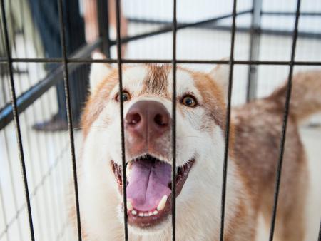 凌源宠物医院带你了解 开宠物店后期需要注意问题及解决方法