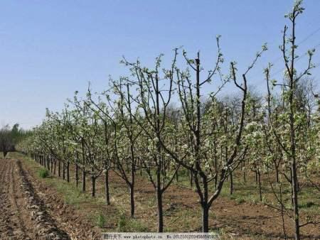 内蒙青扦:苗木移栽提高成活率