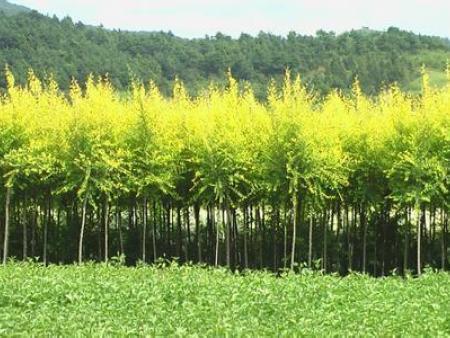 甘肃海棠形势分析和苗木管理要点