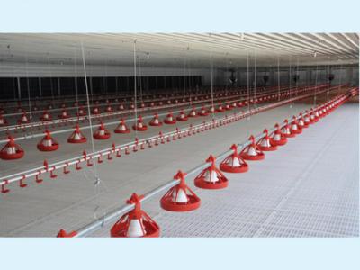 养鸡水线,养鸡料线,养鸡设备,养殖设备厂家,青州恒善畜牧-青州市恒善畜牧设备有限公司