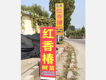 临朐县九州红香椿合作社场景
