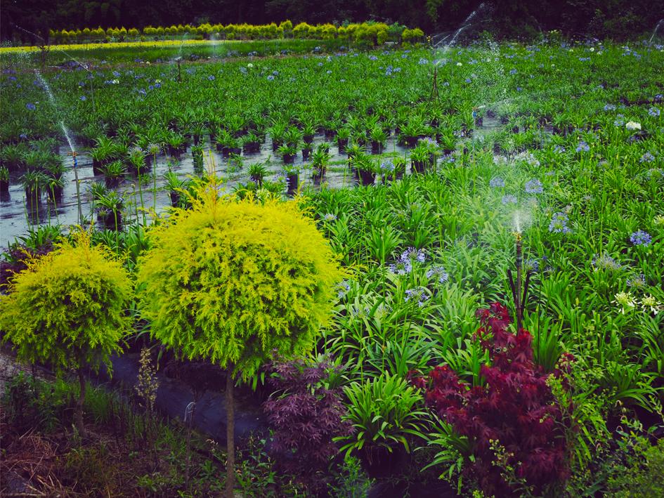 花境植物銷售