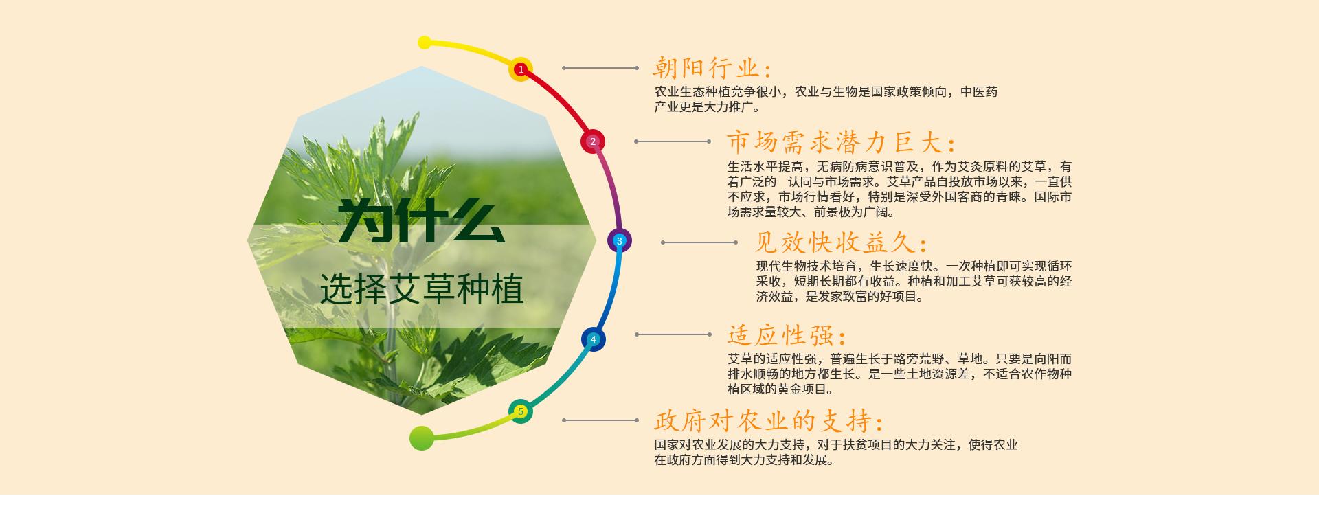 為什么選擇艾草種植