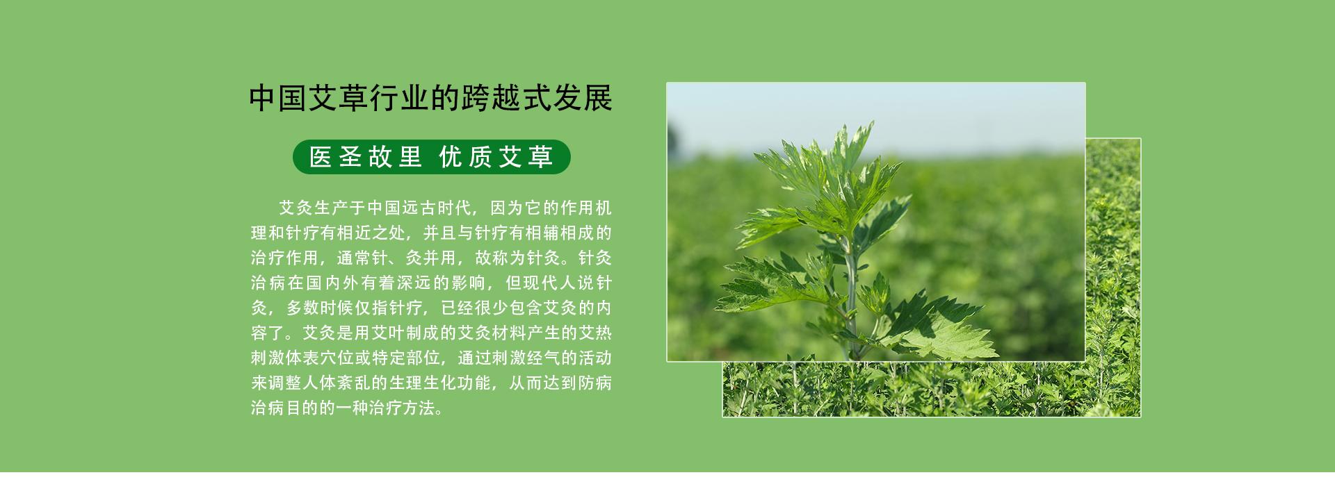 中國艾草行業的跨越式發展