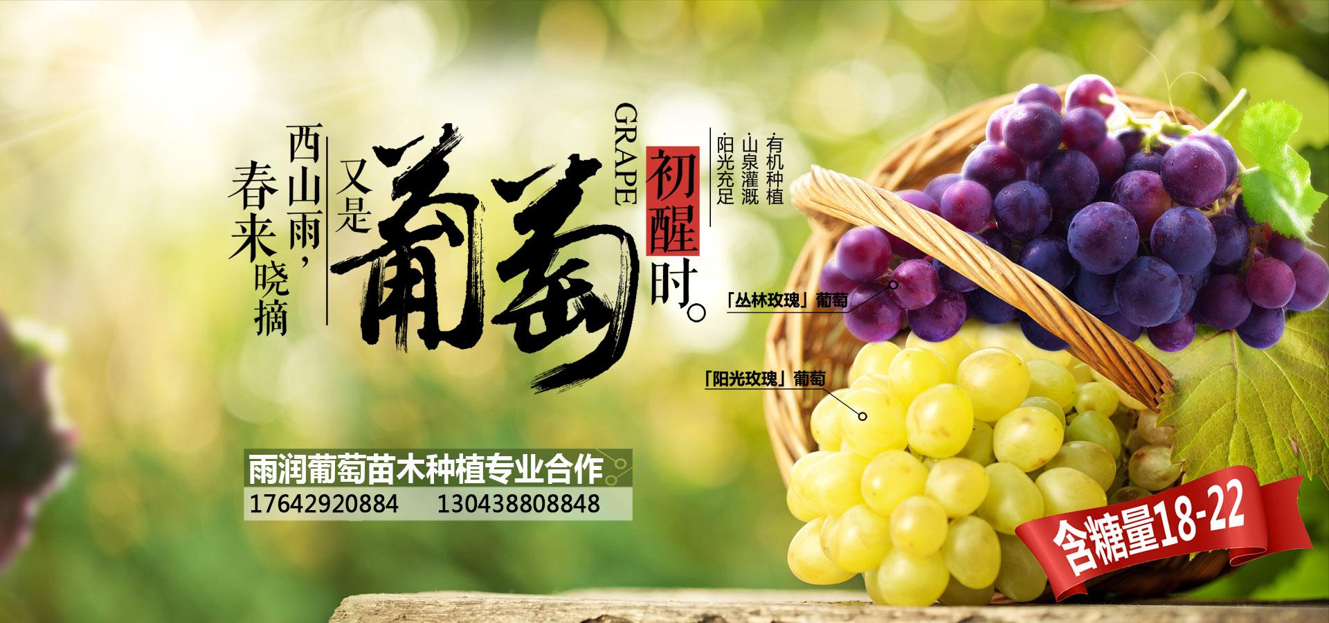 绥中县雨润葡萄苗木种植专业合作社图片