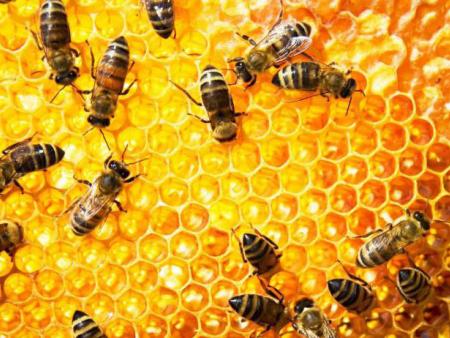 在食品领域中油菜花粉的技术应用(三)