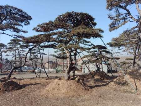 必威betway|体育投注松天然纯净树绿化怎么少得了!