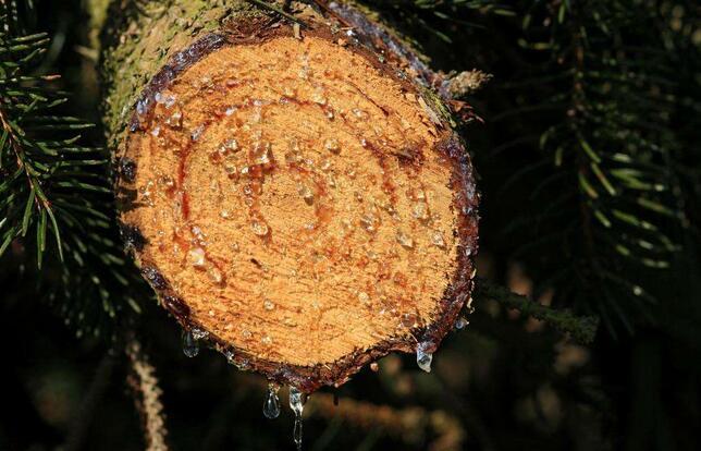 鹤壁蓝赛环保技术有限公司分享离子交换树脂的使用要求