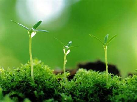 植物提取专用雷竞技手机版