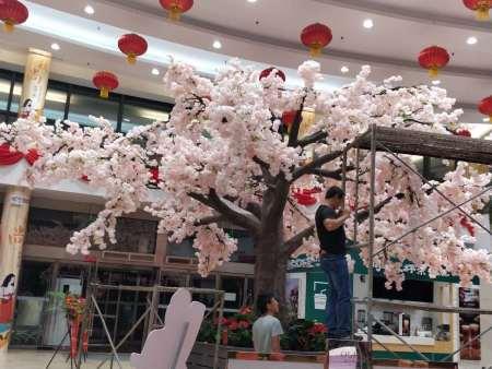 齐鲁商城樱花