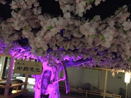 青岛倪氏海泰洗浴樱花树