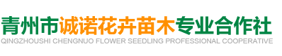 青州市诚诺花卉苗木专业合作社