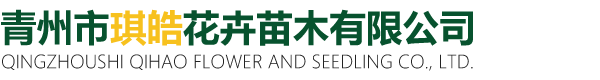 青州市琪皓花卉苗木有限公司