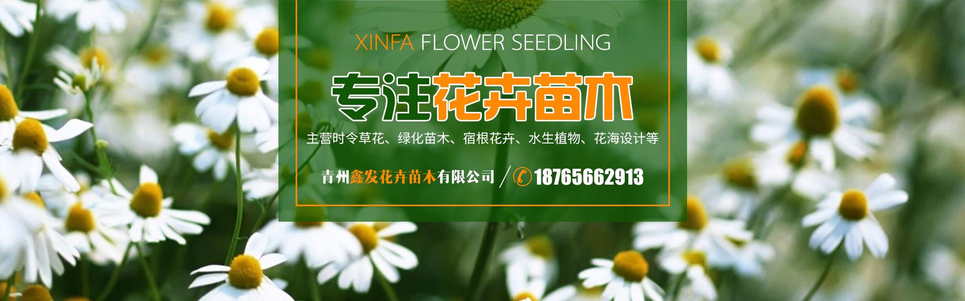 青州鑫发花卉苗木有限公司