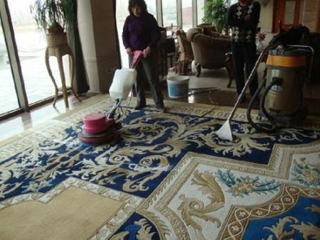 地毯山猫视频直播案例